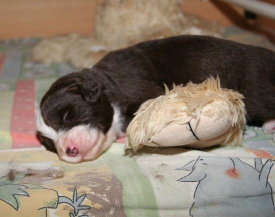 2 weeks boy sleeping on teddy