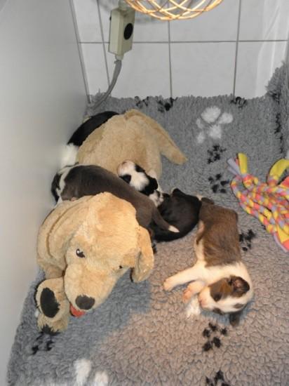 2,5 weeks with cuddel dog