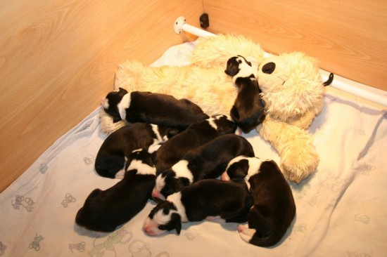 3-days-old