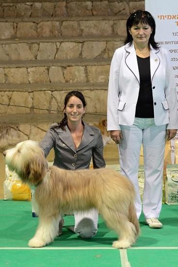 Firstprizebears Lorne Green BIS puppy Ildiko Muszlai 11-12