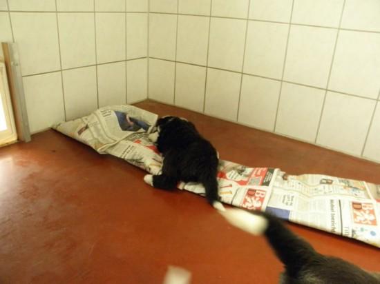5,5,-weeks-Helping-cleaning-Hazel