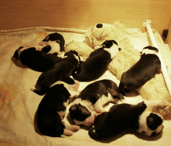 6-days-old