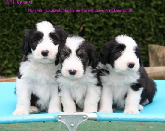 6-weeks-3-boys-lilli