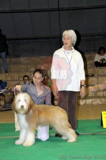 Firstprizebears Lorne Green BIS puppy 17-12-12 Israel