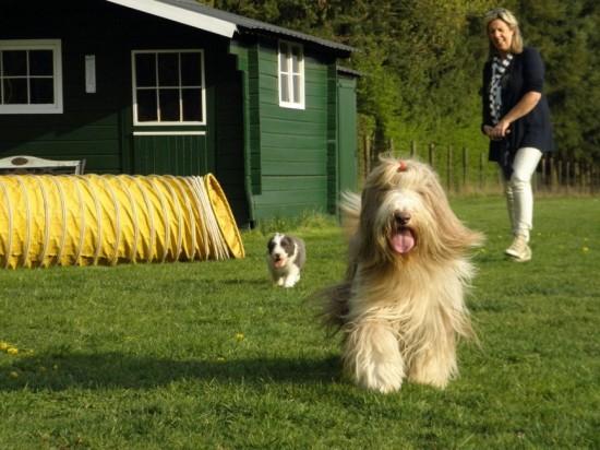 Hazel-puppies-en-visite