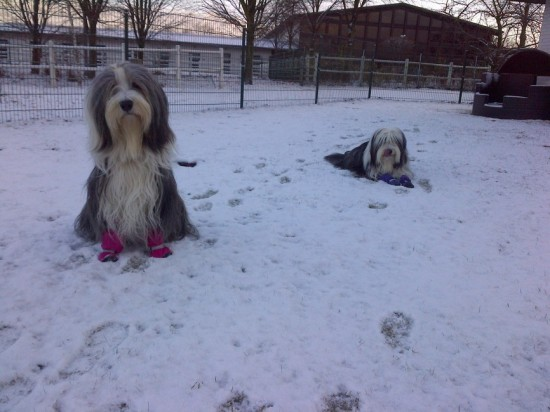 Schmidts Hunde im Schnee 12-12 1