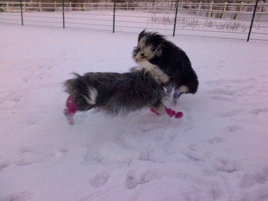 Schmidts Hunde im Schnee 2