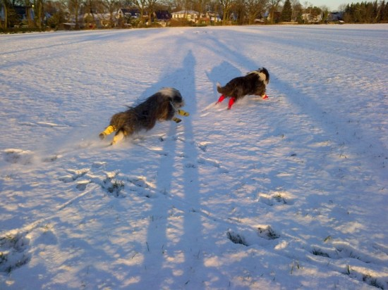 Schmidts Hunde im Schnee 3
