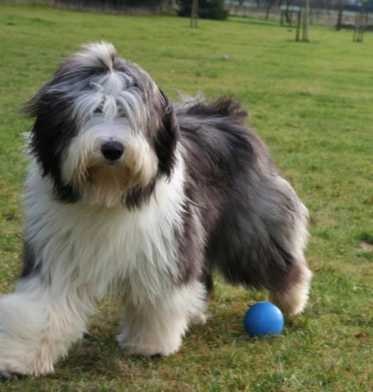 Prada 9 months running with ball
