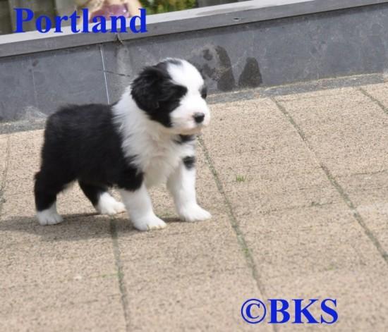 Schoko-5-weeks-Portland-2