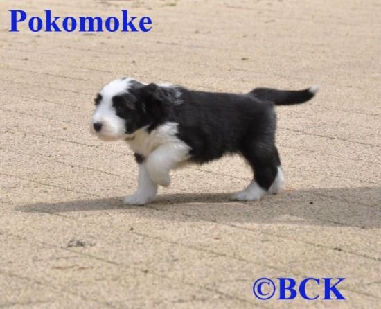 Schoko-65-weeks-Pokomoke-1jpg